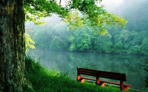 Nature_Forest_Quiet_place_near_the_river_015009_