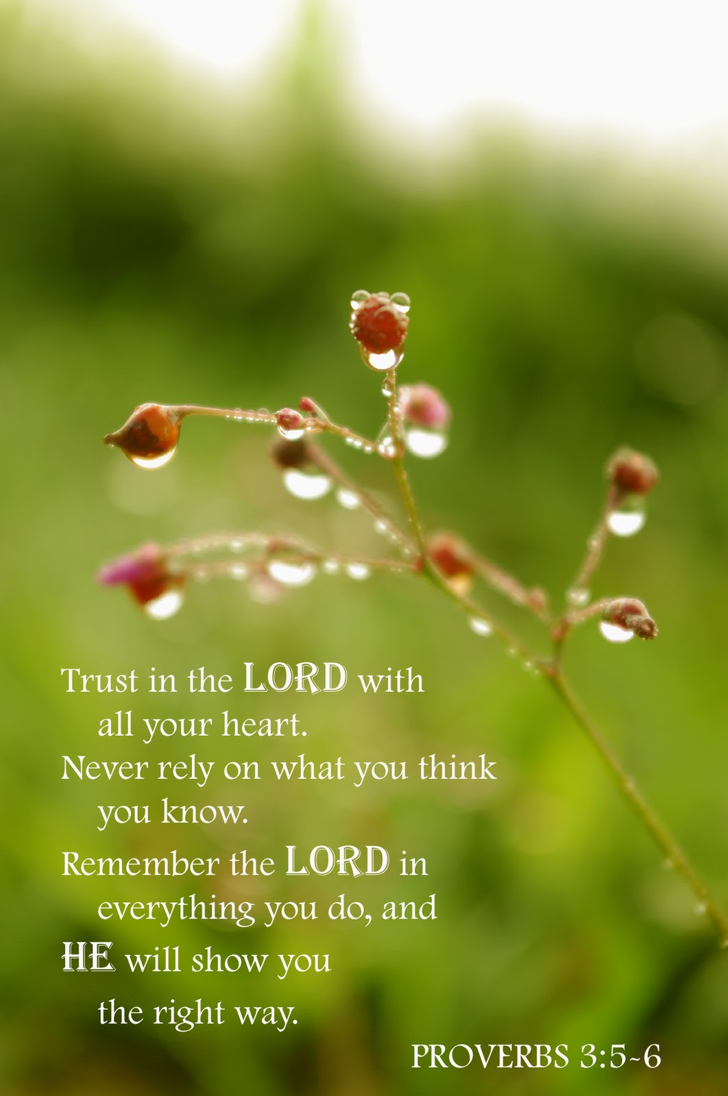 Trusting the Lord (From the Archive: 9/26/2013)